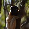Madagascar 2017 (15)