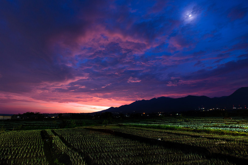 Rice Fields Sunset.jpg