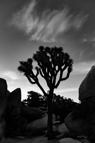Heavenly Joshua Tree