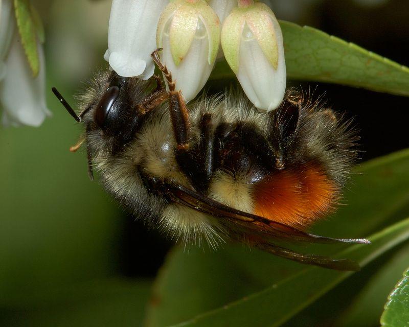 bumblebeelanterrns2.jpg