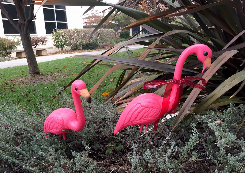 art flamingos.jpg
