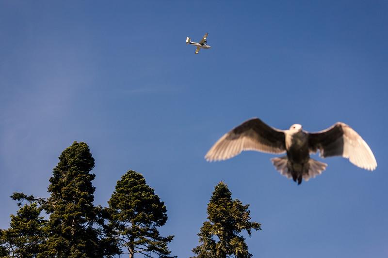 seagull photobomb.jpg