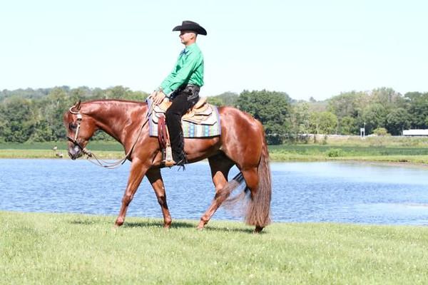 BC Quarter Horses