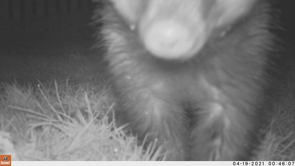 In the Garden - Nature Cam
