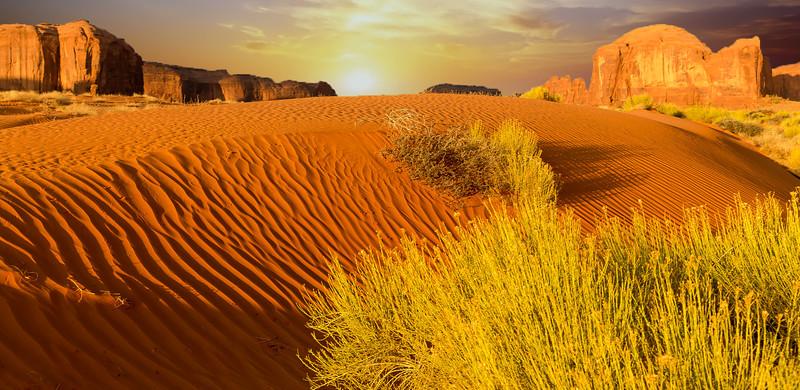 Sand dunes & bushes sunrise 2B.jpg