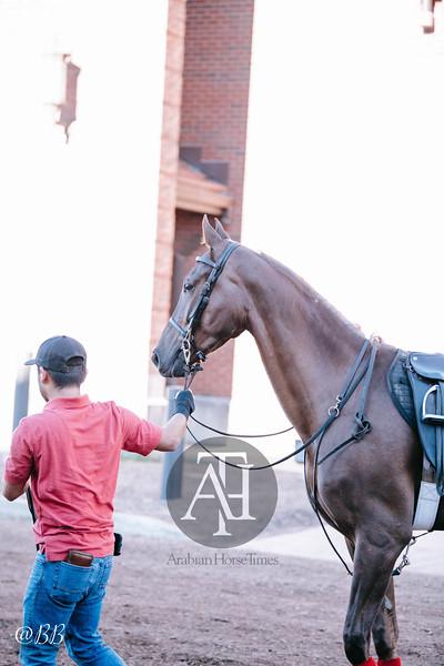 National Show Horse Finals