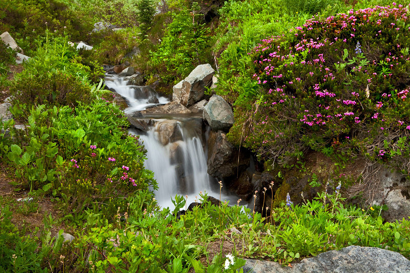 Wildflowers with cascading waterfall, Mt Rainier, Washington