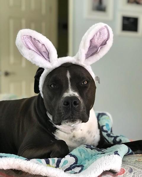 Kaylee Bunny 4 year adoptaversary 040118