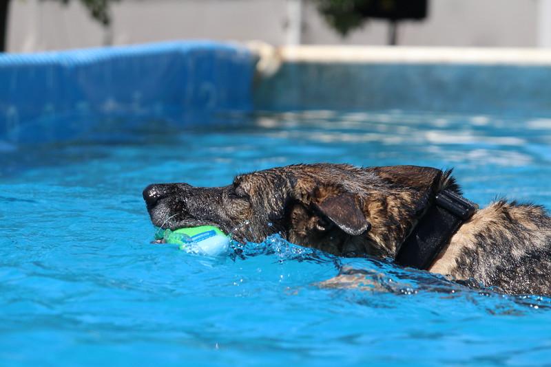 2015.8.6 Winnebago County Fair Dock Dogs (25).JPG