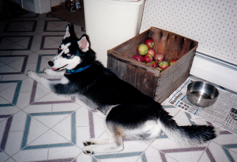 Clea guarding the apples.jpg