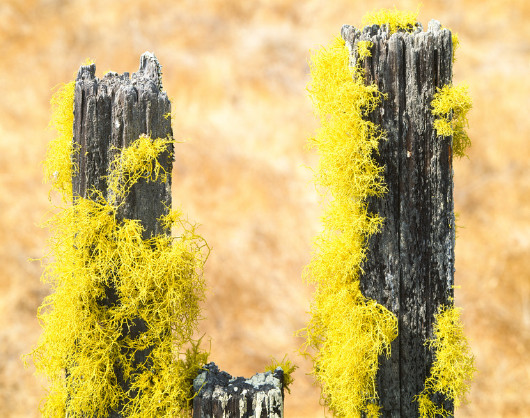 Fence posts, Sonoma County, California, 1994
