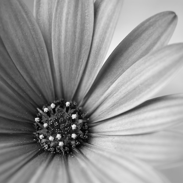Wright.16x16.Pollinators Delight.jpg