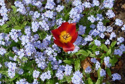 Garden10May