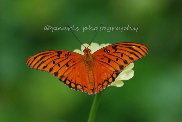 CNC Butterflies