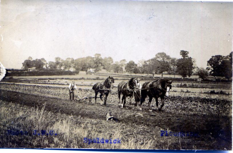 Hawthorns ploughing
