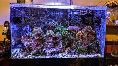 2020-02-05 - Reef tank update