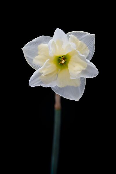 Flower032720-285.jpg