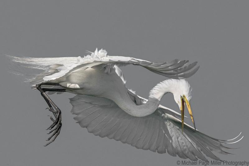 Florida Birds 23-04-16_1677.jpg