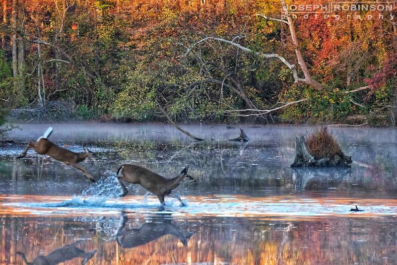 Deer~01-01.jpeg