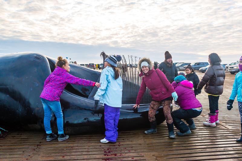 Utqiagvik Whaling-6104892-Juno Kim-nw.jpg
