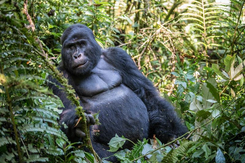 Uganda_T_Gor-367.jpg