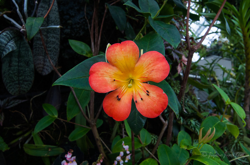 Flower at the Cloud Forest