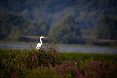 2021-07-25 Trempealeau Wildlife Refuge