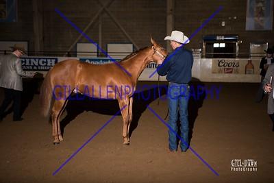 Preformance Stallions Open & NSBA