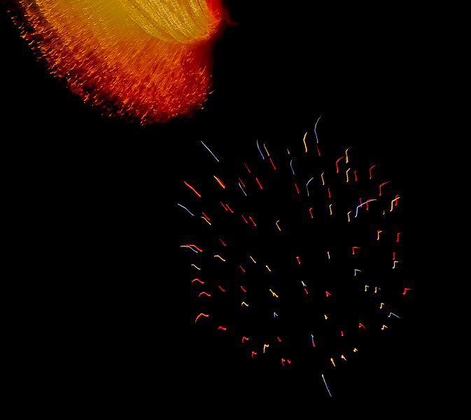 Fireworks-173.jpg