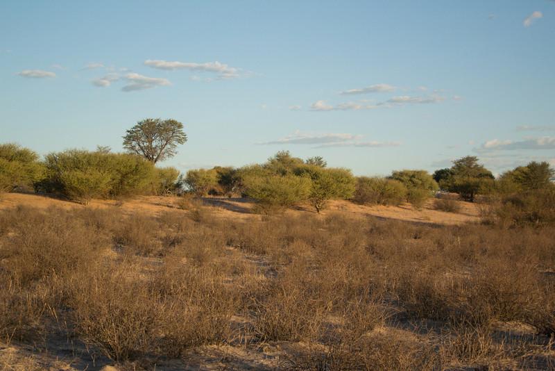 Baobab Mar 2013-13-112.jpg