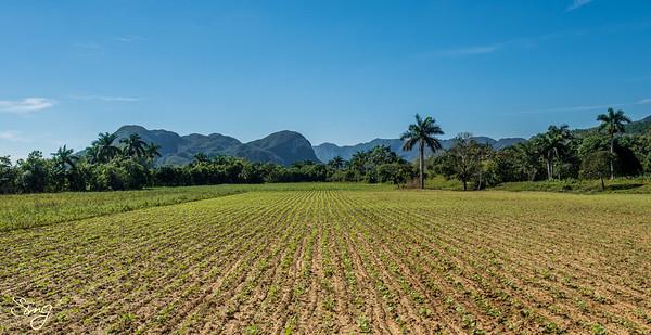 El Valle de Viñales. Viñales, Cuba