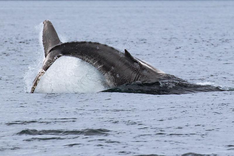 Alaska 2015 - Juneau -  072615-350.jpg