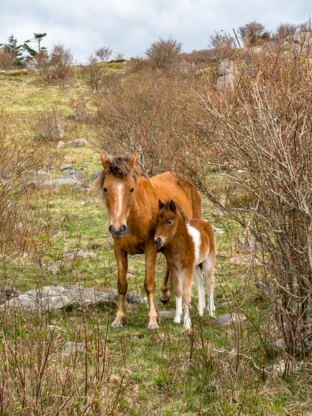 135 Apr 28 Mare and Foal greyson H-1.jpg