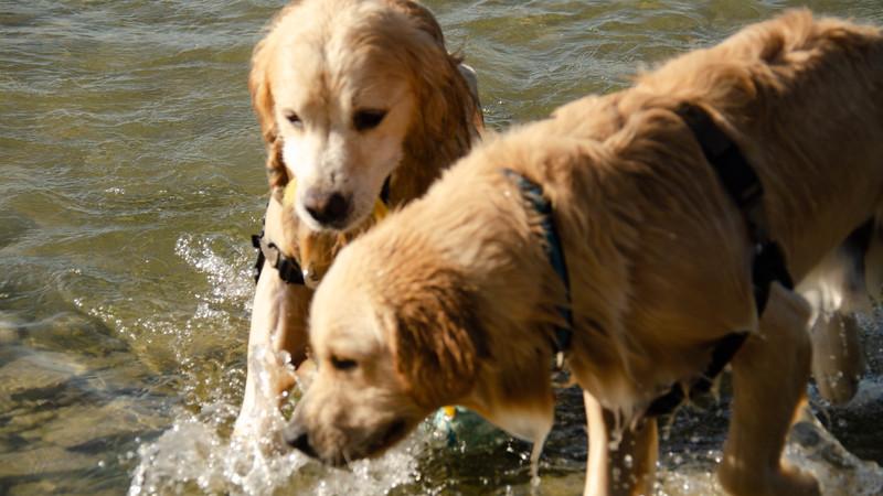 PuppyParty18-681.jpg