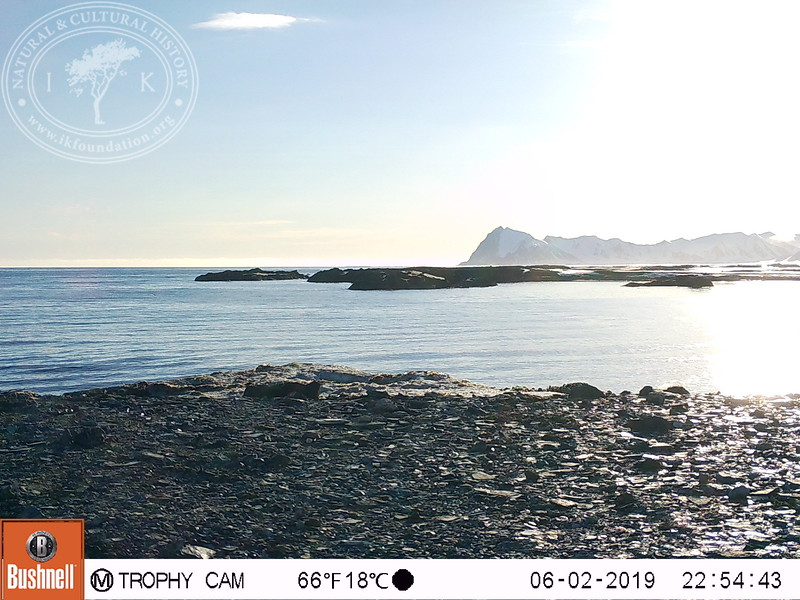 Research pictures – facing West, North, East and South – by four trail cameras on the Field Station   Naturae Observatio   Martin's Eye, placed on the west coast of Forlandsletta on Spitsbergen.