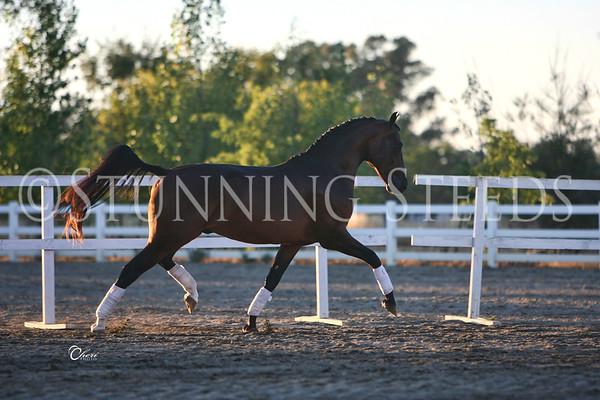 ALB horses at Dragonfire Farm-Sacramento CA