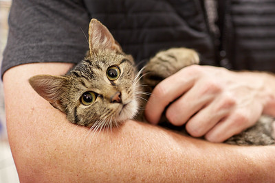 2017-10-28, Fenix, Umísťovací výstava koček