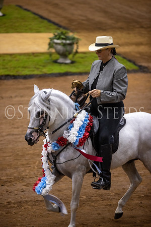 120 Pleasure Amateur Colts Stallions Championship