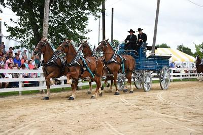 Reg 4 horse