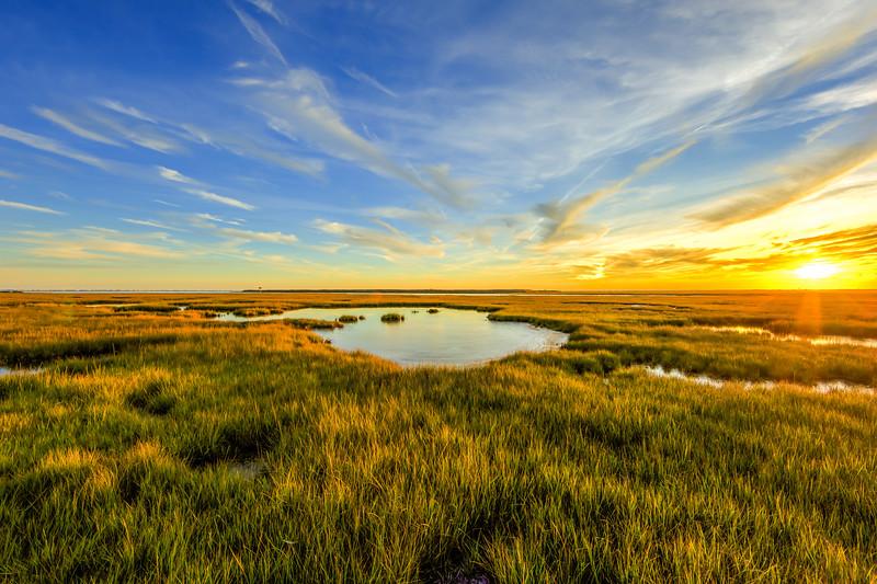 Midas on the Marsh