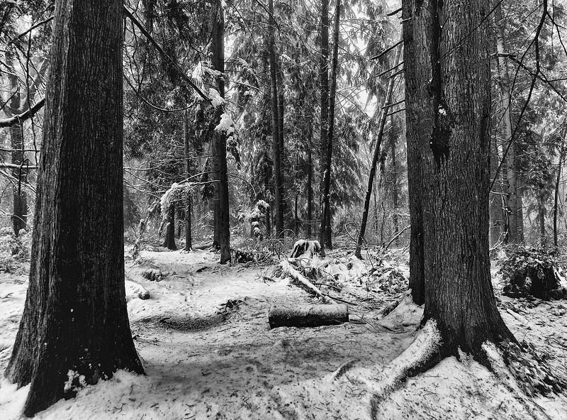Snow day  245.jpg
