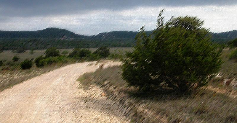 Cedar on road rough pastel.jpg