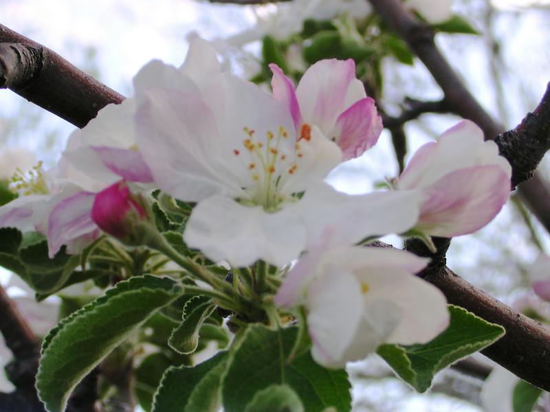 apple729.JPG
