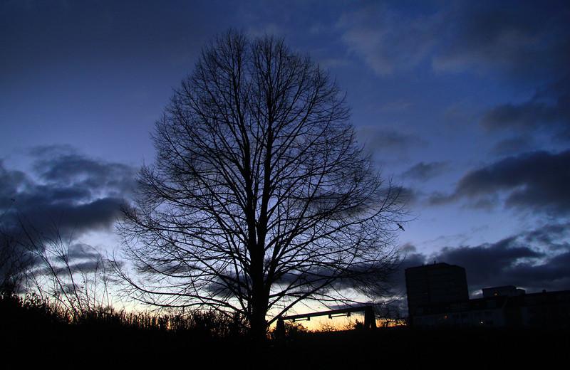 frankfurt tree.jpg