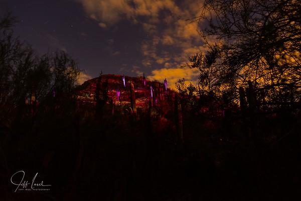 Desert Botanical Garden & the Klip Collective