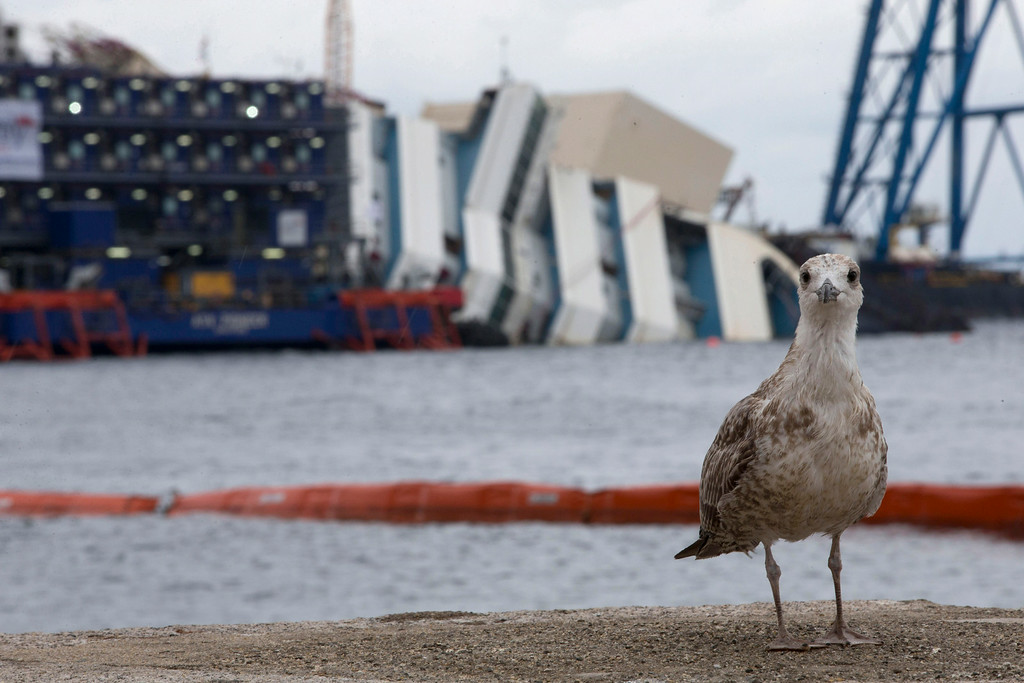 """. A bird stands in front of the Costa Concordia ship as it lies on its side on the Tuscan Island of Giglio, Italy, Sunday, Sept. 15, 2013. Authorities have given the final go-ahead for a daring attempt Monday to pull upright the crippled Costa Concordia cruise liner from its side in the waters off Tuscany, a make-or-break engineering feat that has never before been tried in such conditions. The ship capsized there 20 months ago, and Italy\'s national Civil Protection agency waited until sea and weather conditions were forecast for dawn Monday before giving the OK to try to right it. In a statement Sunday, the Civil Protection agency said the sea and wind conditions \""""fall within the range of operating feasibility.\"""" (AP Photo/Andrew Medichini)"""