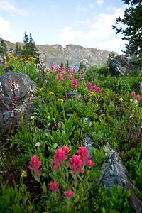 Flowers near Missouri Lakes, CO