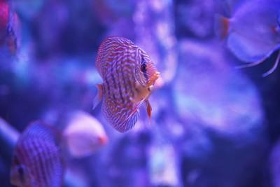 NY, Albany - Aquarium, 2018