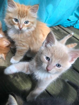 Nowhere Else Festival Townsend Farm Kittens