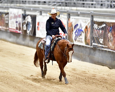 NP TWO  HANDED REINED COWHORSE